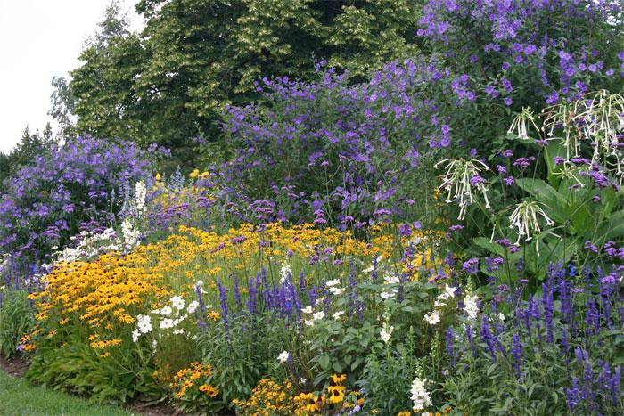 Цветы многолетники для сада долгоцветущие фото и названия