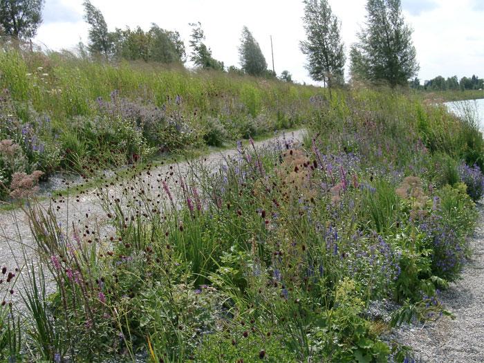 Berühmt Lebendige Gärten mit heimischen Stauden - Stauden.de @KU_14