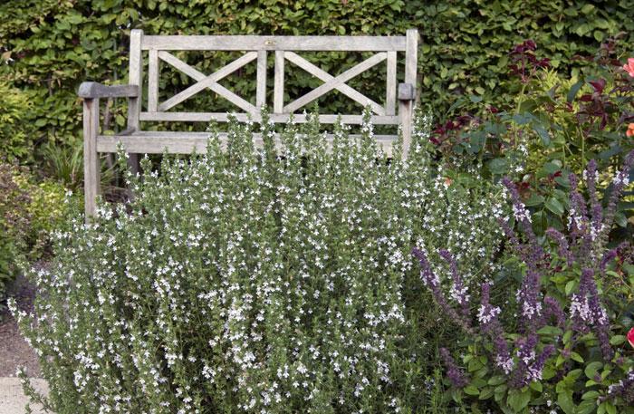 Stauden Attraktive Lückenfüller Für Pflanzbeete Im Garten Staudende